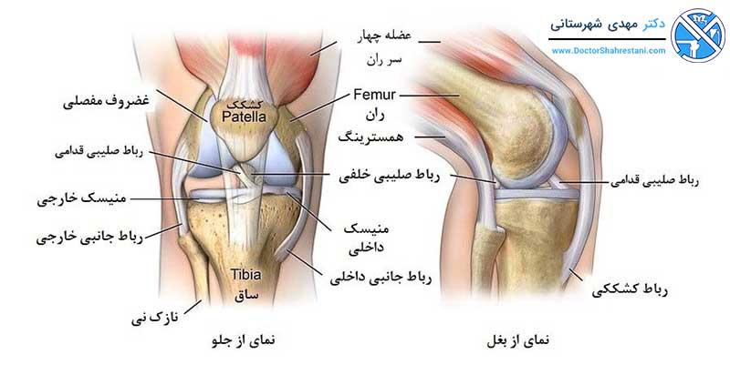 اجزای تشکیل دهنده زانو(آناتومی زانو)