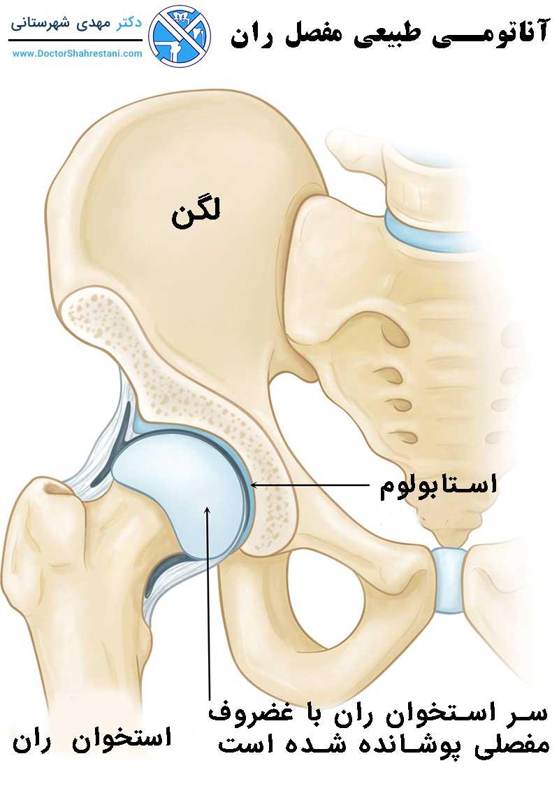 آناتومی طبیعی مفصل ران