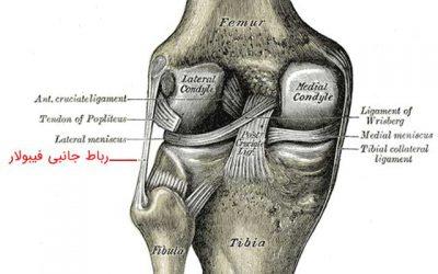 رباط جانبی فیبولار